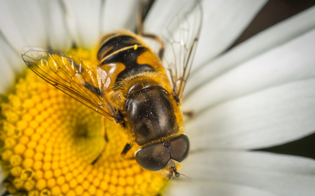 La producción de miel cae un 6 % en España en 2017